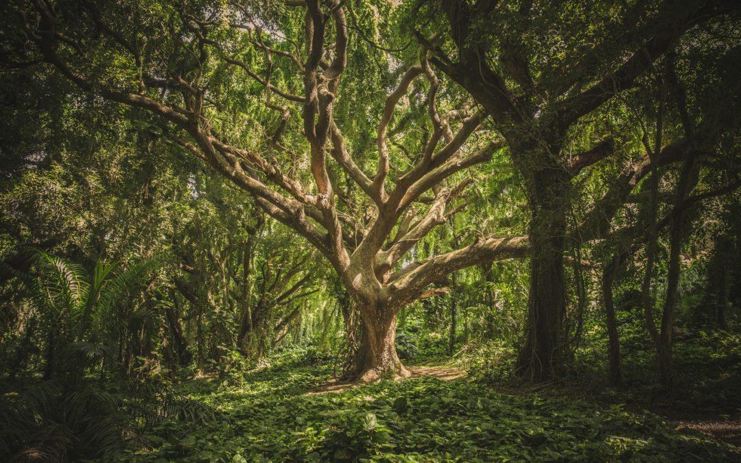 El anciano árbol sabio y sus exquisitos frutos · 3ª Parte